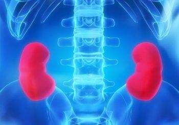 ledviny
