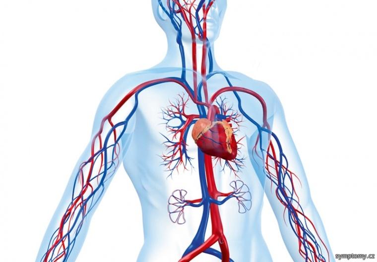 Cukrovka likviduje naše cévy